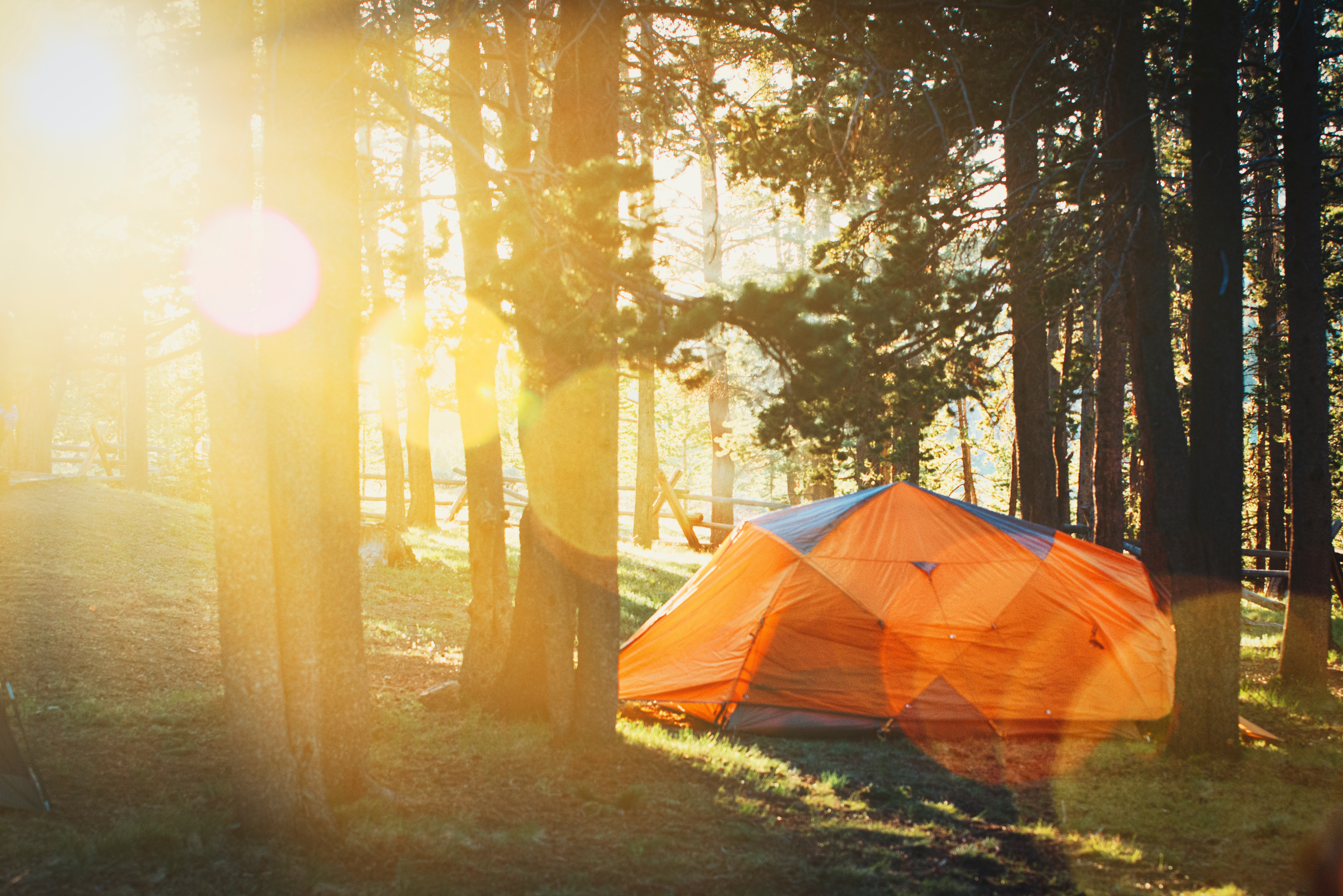 Tent in forest sunrise